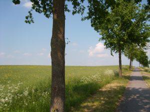 Stress und Burnout Therapie